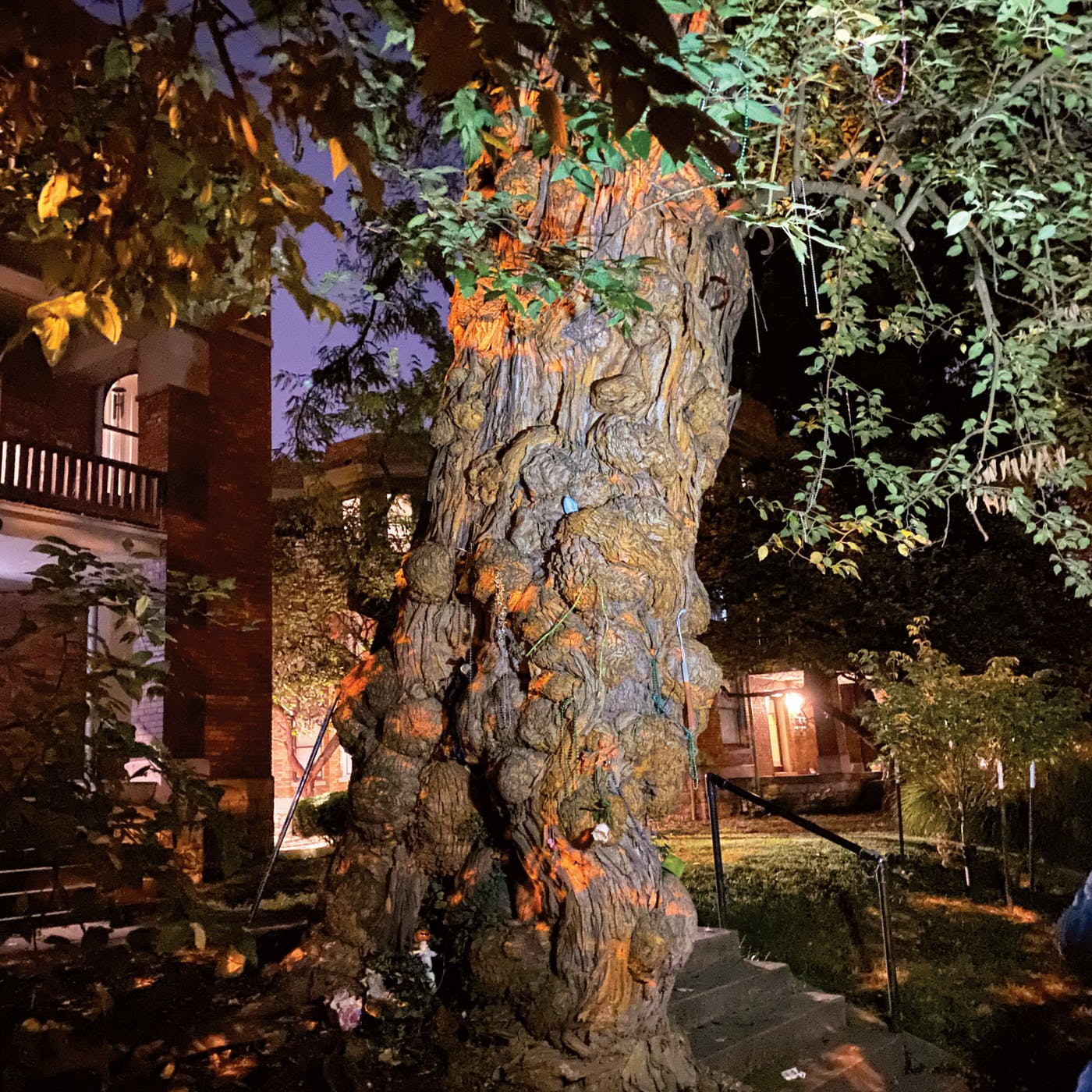 Witches' Tree